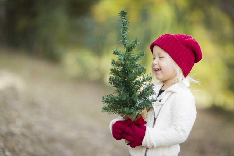 Christmas Tree Farms Near Brainerd - Bay Area Christmas Tree Farms